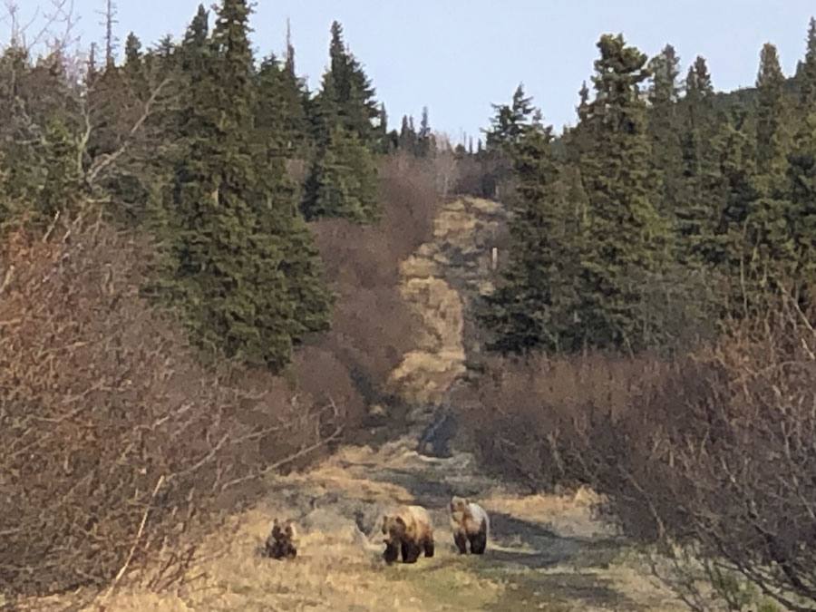 Bears on Gasline – May 13th, 2019